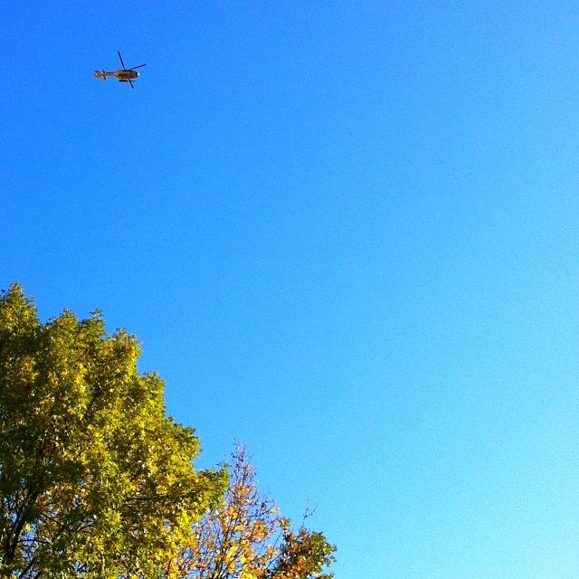 Christophorus Hubschrauber über einem grün-gelben Baum vor blauem Himmel