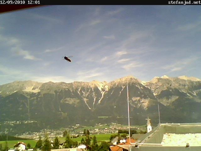 Biene im Flug vor der Webcam