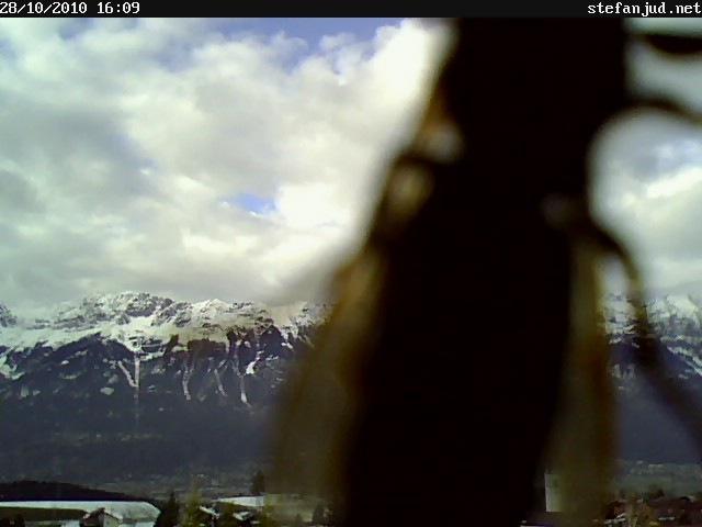 Wespe auf der Webcam