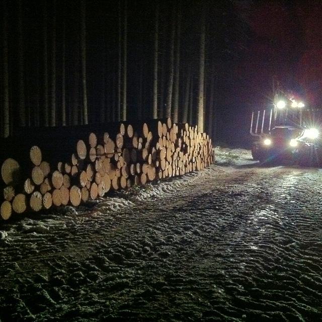 Baumstämme im Wald bei nächtlichen Holzarbeiten