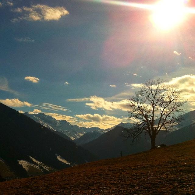 Einsamer Baum am grünen Hang